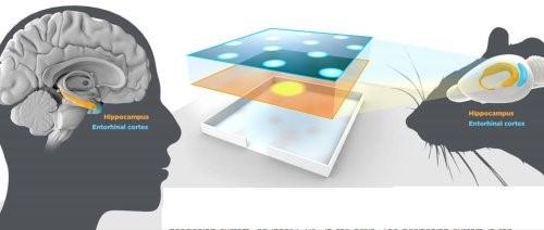 Система внутренней GPS головного мозга
